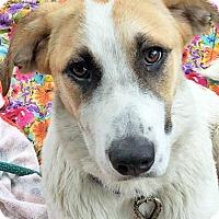 Adopt A Pet :: Kenya - pup! - Beacon, NY