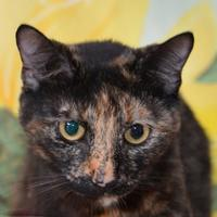 Adopt A Pet :: Drizzy - Englewood, FL