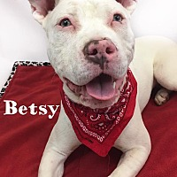 Adopt A Pet :: Betsy - Toledo, OH