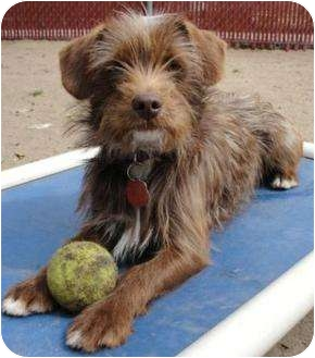 Terrier (Unknown Type, Small) Mix Dog for adoption in Edmonton, Alberta - Martin