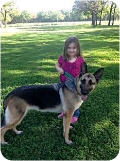 German Shepherd Dog Dog for adoption in Fort Worth, Texas - SISTER - ADOPTED!