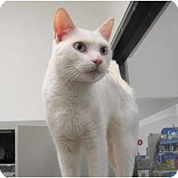 Adopt A Pet :: Emerson - Warminster, PA