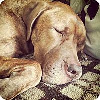 Adopt A Pet :: ASHIRA-JJ - Roundup, MT