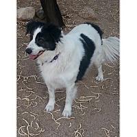 Adopt A Pet :: Lucky Strike - Tempe, AZ