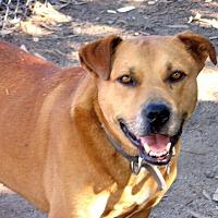 Adopt A Pet :: Roc - Vista, CA