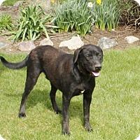 Adopt A Pet :: Nash - Lewisville, IN