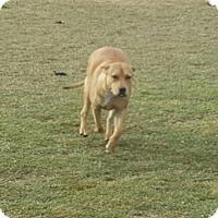 Adopt A Pet :: Suki - Dana Point, CA