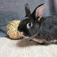 Adopt A Pet :: Geordie - Newport, DE