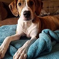 Adopt A Pet :: Scarlett - Carlisle, TN