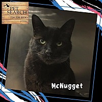 Adopt A Pet :: McNugget - Washington, PA