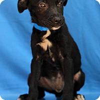 Adopt A Pet :: Bard - Waldorf, MD