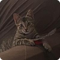 Adopt A Pet :: Leia - Turnersville, NJ