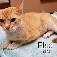 Adopt A Pet :: Elsa - Alvin, TX