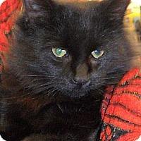 Adopt A Pet :: Pooky - Kalamazoo, MI