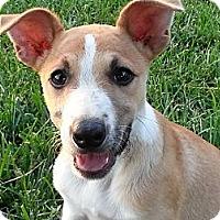 Adopt A Pet :: Rose - Linton, IN