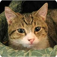 Adopt A Pet :: Valley Boy - Plainville, MA