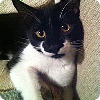 Adopt A Pet :: Alvin (LE) - Little Falls, NJ