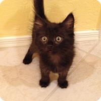 Adopt A Pet :: Alex - Gilbert, AZ