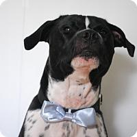 Adopt A Pet :: Oscar De la Renta - Lake Worth, FL