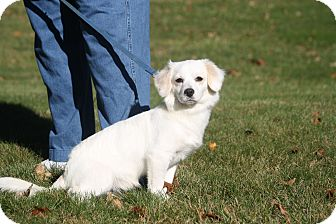 Spaniel (Unknown Type)/Pekingese Mix Dog for adoption in West Milford, New Jersey - BOO-pending