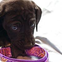 Adopt A Pet :: Little Sunny - Broomfield, CO