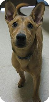 Shepherd (Unknown Type) Mix Dog for adoption in Gary, Indiana - Star