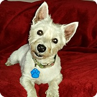 Adopt A Pet :: Sadie Mae-Pending Adoption - Omaha, NE