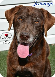 Labrador Retriever Mix Dog for adoption in Youngwood, Pennsylvania - Jennings