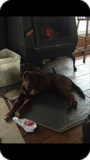 Terrier (Unknown Type, Medium) Mix Dog for adoption in Edmonton, Alberta - Daisy