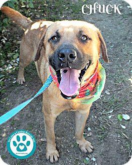 Shepherd (Unknown Type) Mix Dog for adoption in Kimberton, Pennsylvania - Chuck