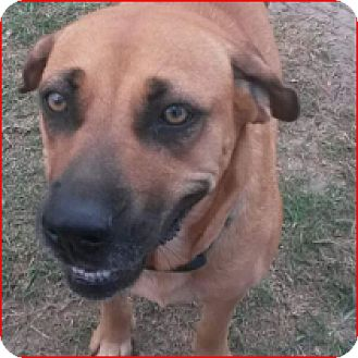 Black Mouth Cur Mix Dog for adoption in Austin, Texas - Happy Feet