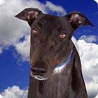 Adopt A Pet :: Soldier - Spencerville, MD