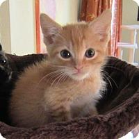 Adopt A Pet :: Sydney - Orange, CA