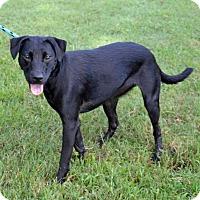 Adopt A Pet :: Bella - Englewood, FL