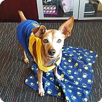 Adopt A Pet :: RUDY (CAT FRIENDLY) - Las Vegas, NV