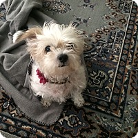 Adopt A Pet :: Arabella - Los Angeles, CA