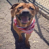 Adopt A Pet :: WHITNEY - Canfield, OH