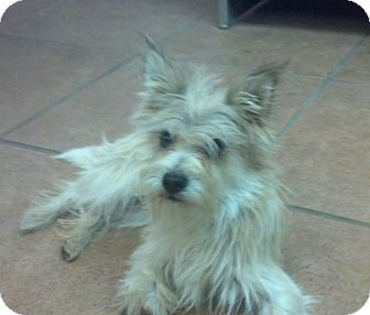 Terrier (Unknown Type, Small) Mix Dog for adoption in Windham, New Hampshire - Heckel