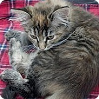 Adopt A Pet :: Khloe - Sterling Hgts, MI