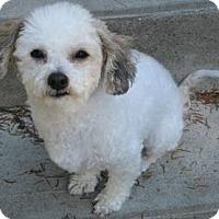 Adopt A Pet :: Martin - Dover, MA