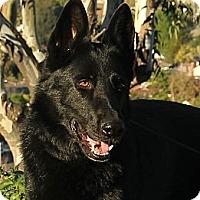 Adopt A Pet :: Gunther - Laguna Niguel, CA