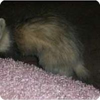 Adopt A Pet :: Syd - Spokane Valley, WA