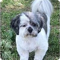 Adopt A Pet :: Herbie-VA - Mays Landing, NJ