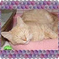 Adopt A Pet :: Clarissa - KANSAS, MO