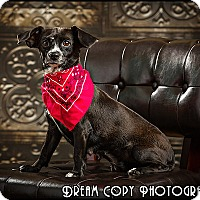 Adopt A Pet :: Bess - Owensboro, KY