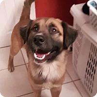 Adopt A Pet :: Ansel - Hamilton, ON