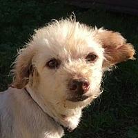 Adopt A Pet :: Bert - San Clemente, CA