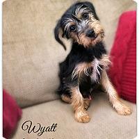 Adopt A Pet :: Wyatt - Pascagoula, MS