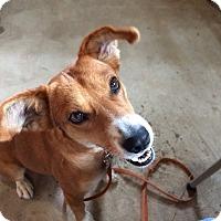Adopt A Pet :: Mesquite TM - Schertz, TX