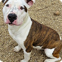 Adopt A Pet :: Spud - West Babylon, NY